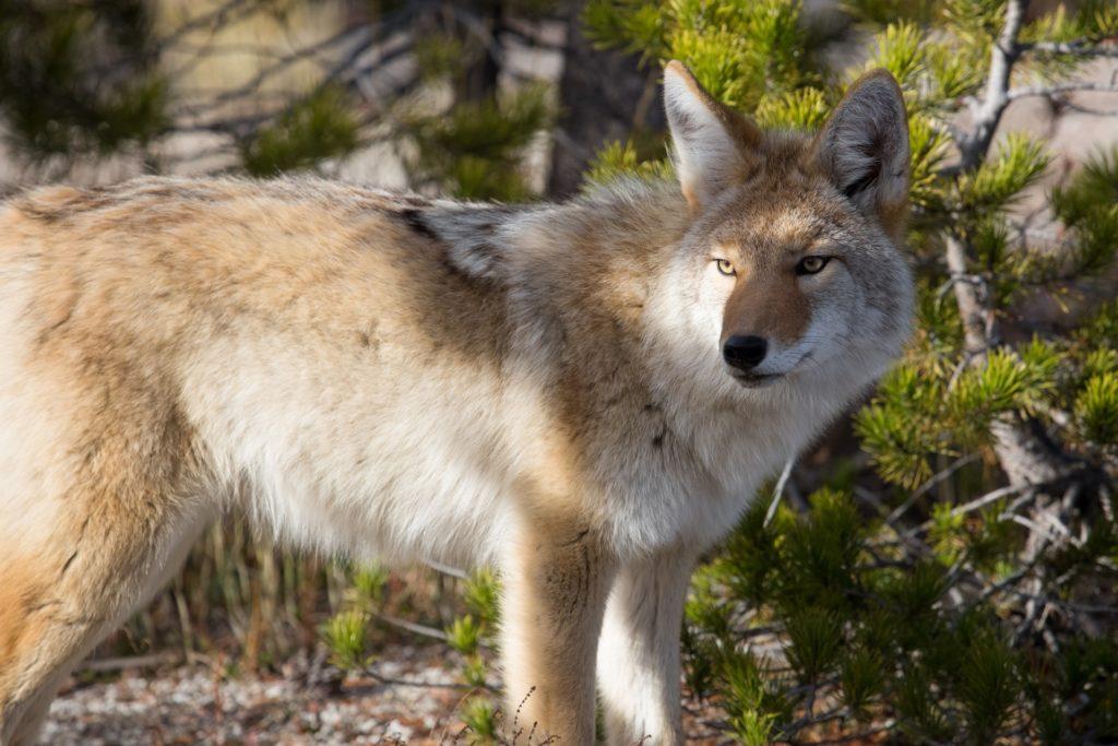 Warden Wildlife Control ⋆ Tulsa Premier Contractors